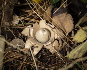 FUNGI WALK HAW PARK WOODS FRIENDS OF GROUP 20-10-19-16